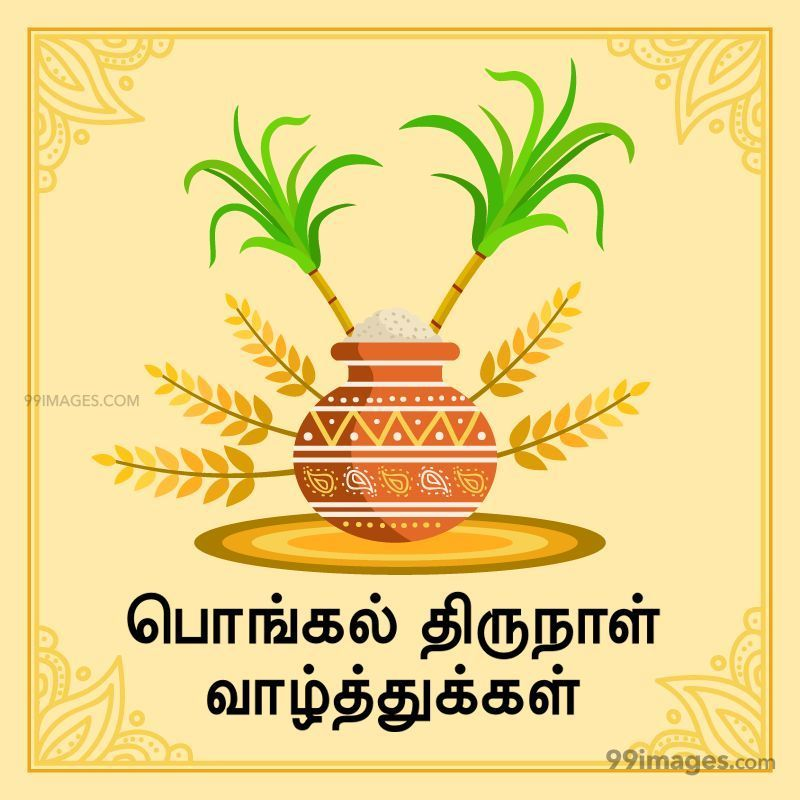 [15th January 2020] Happy Pongal (Pongal Vazhthukkal) in Tamil, WhatsApp DP Images, Wishes, Quotes, Messages HD (282430) - Pongal