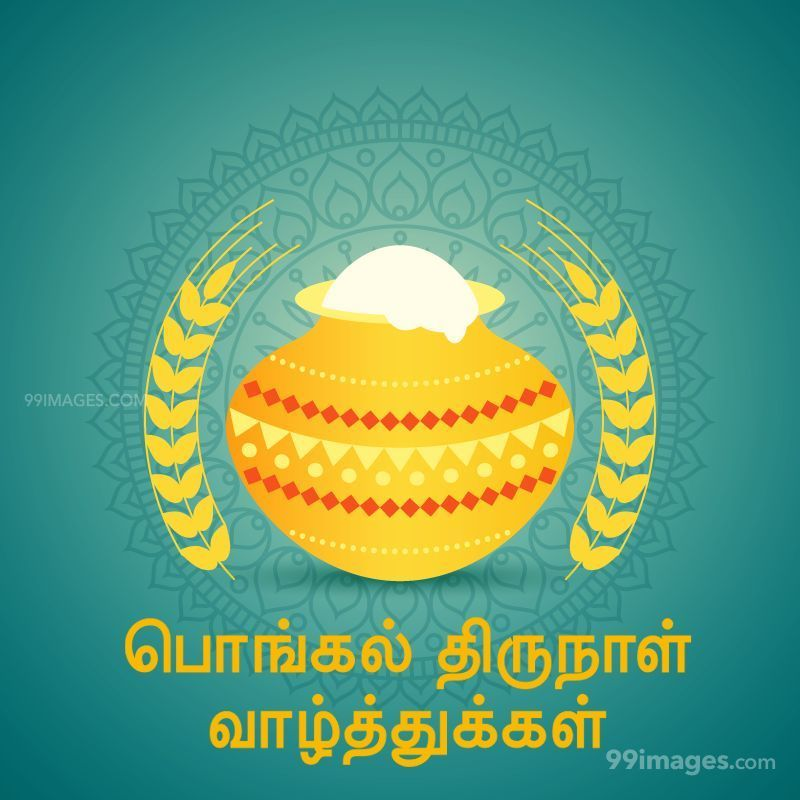 [14th January 2021] Happy Pongal (Pongal Vazhthukkal) in Tamil, WhatsApp DP Images, Wishes, Quotes, Messages HD (282269) - Pongal