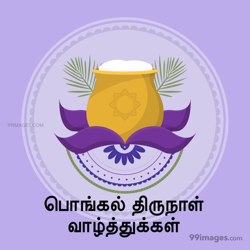 [14th January 2021] Happy Pongal (Pongal Vazhthukkal) in Tamil, WhatsApp DP Images, Wishes, Quotes, Messages HD (282417) - Pongal