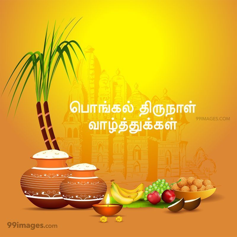 [14th January 2021] Happy Pongal (Pongal Vazhthukkal) in Tamil, WhatsApp DP Images, Wishes, Quotes, Messages HD (283395) - Pongal