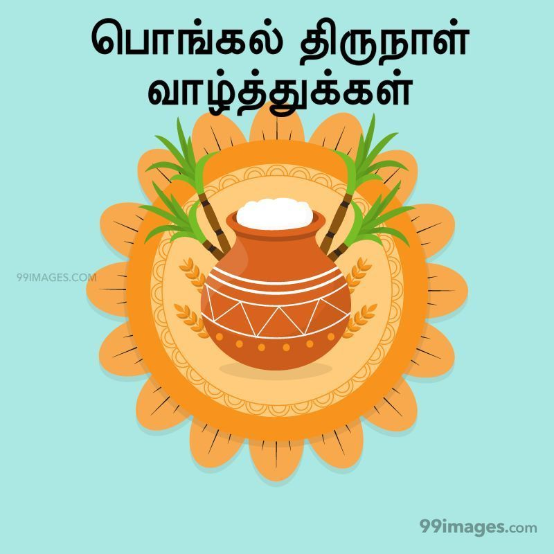 [14th January 2021] Happy Pongal (Pongal Vazhthukkal) in Tamil, WhatsApp DP Images, Wishes, Quotes, Messages HD (282283) - Pongal