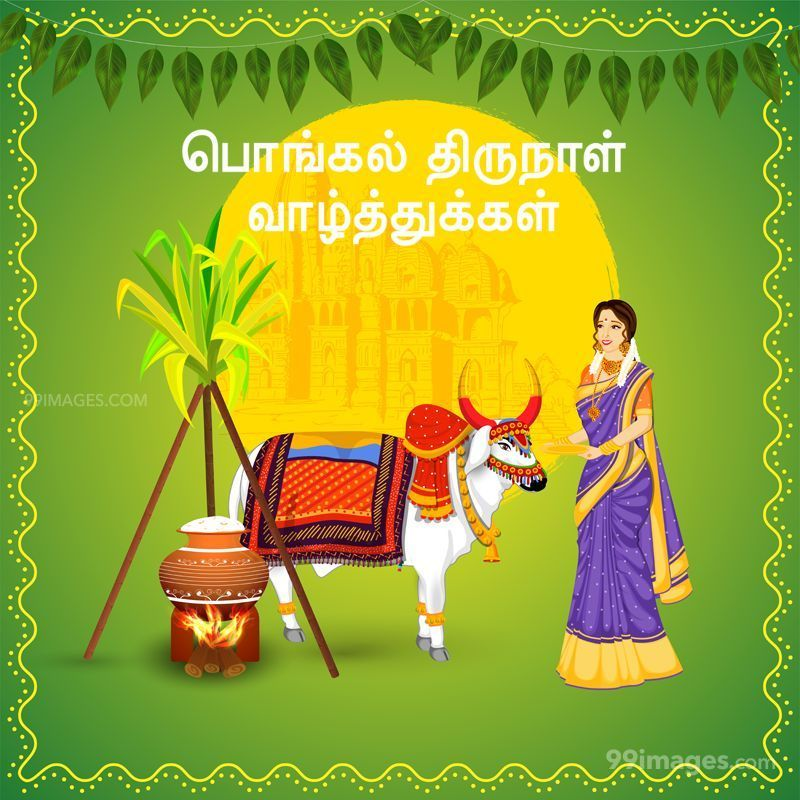 [15th January 2020] Happy Pongal (Pongal Vazhthukkal) in Tamil, WhatsApp DP Images, Wishes, Quotes, Messages HD (283382) - Pongal