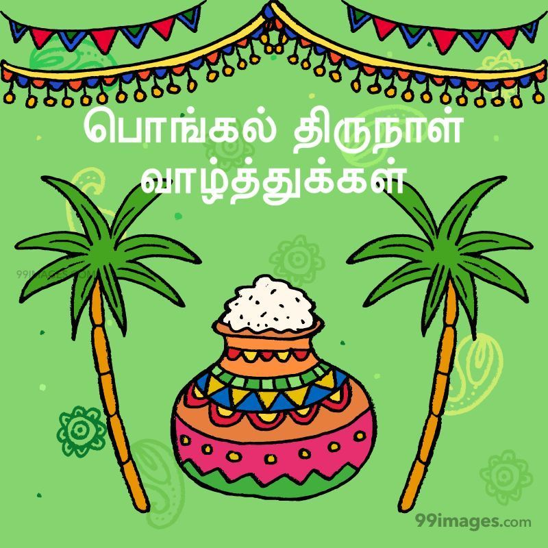 [14th January 2021] Happy Pongal (Pongal Vazhthukkal) in Tamil, WhatsApp DP Images, Wishes, Quotes, Messages HD (282383) - Pongal