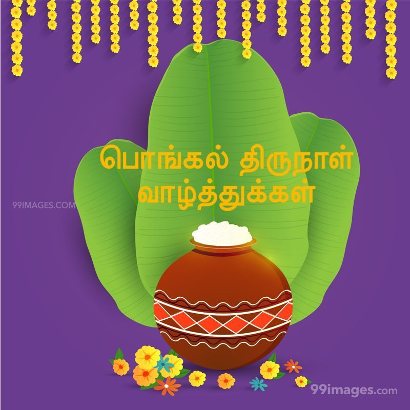 [14th January 2021] Happy Pongal (Pongal Vazhthukkal) in Tamil, WhatsApp DP Images, Wishes, Quotes, Messages HD (283390) - Pongal
