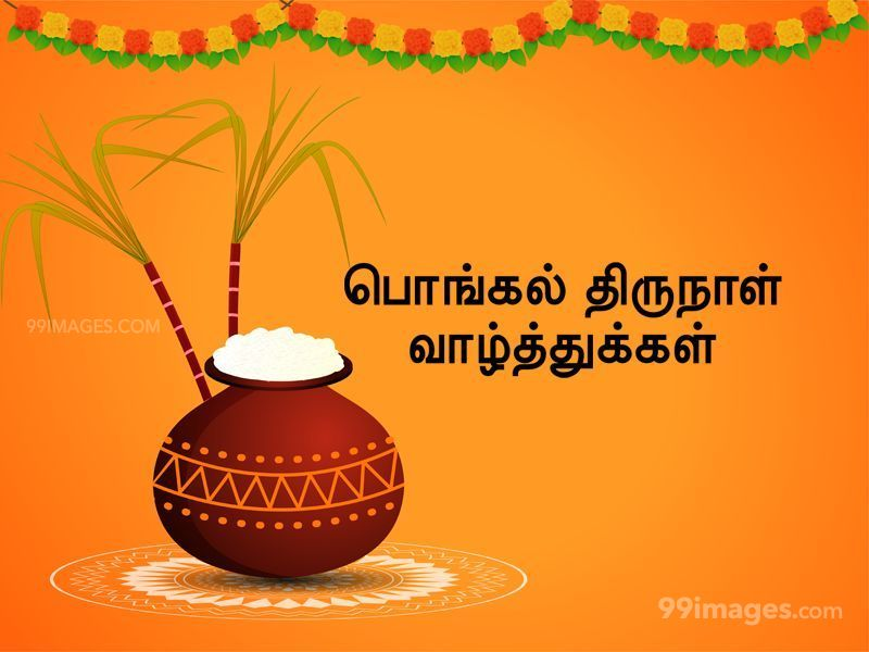 [14th January 2021] Happy Pongal (Pongal Vazhthukkal) in Tamil, WhatsApp DP Images, Wishes, Quotes, Messages HD (283384) - Pongal