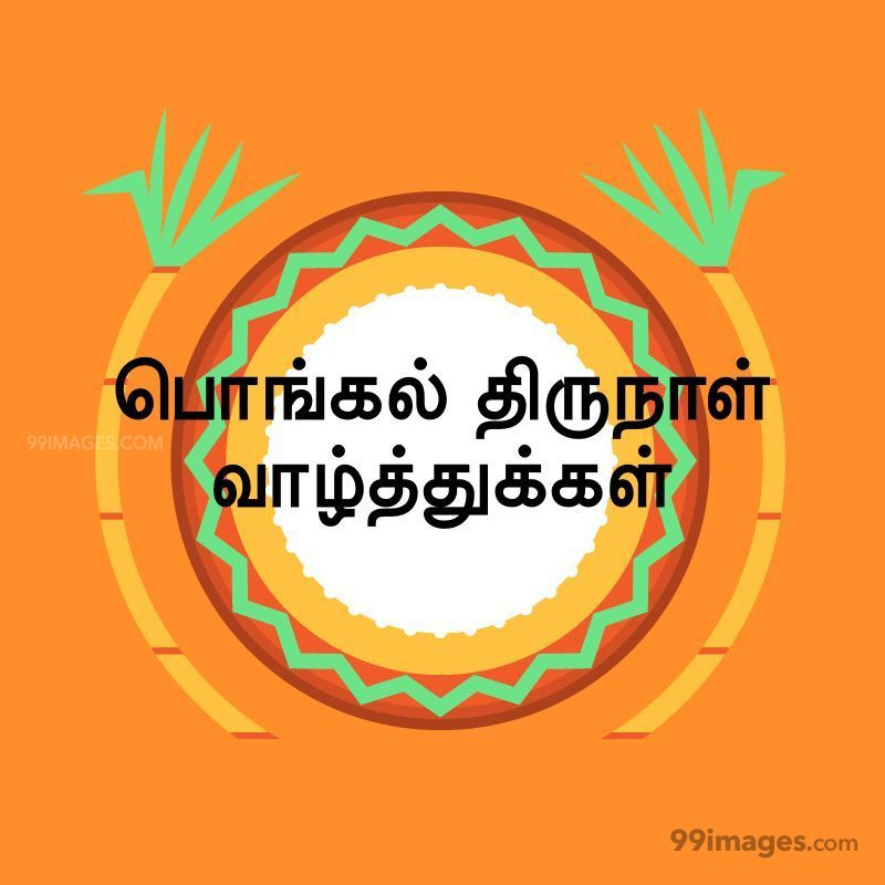 [14th January 2021] Happy Pongal (Pongal Vazhthukkal) in Tamil, WhatsApp DP Images, Wishes, Quotes, Messages HD (282379) - Pongal