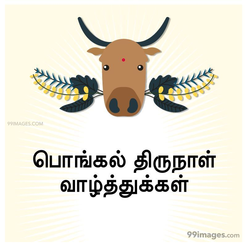 [14th January 2021] Happy Pongal (Pongal Vazhthukkal) in Tamil, WhatsApp DP Images, Wishes, Quotes, Messages HD (282280) - Pongal