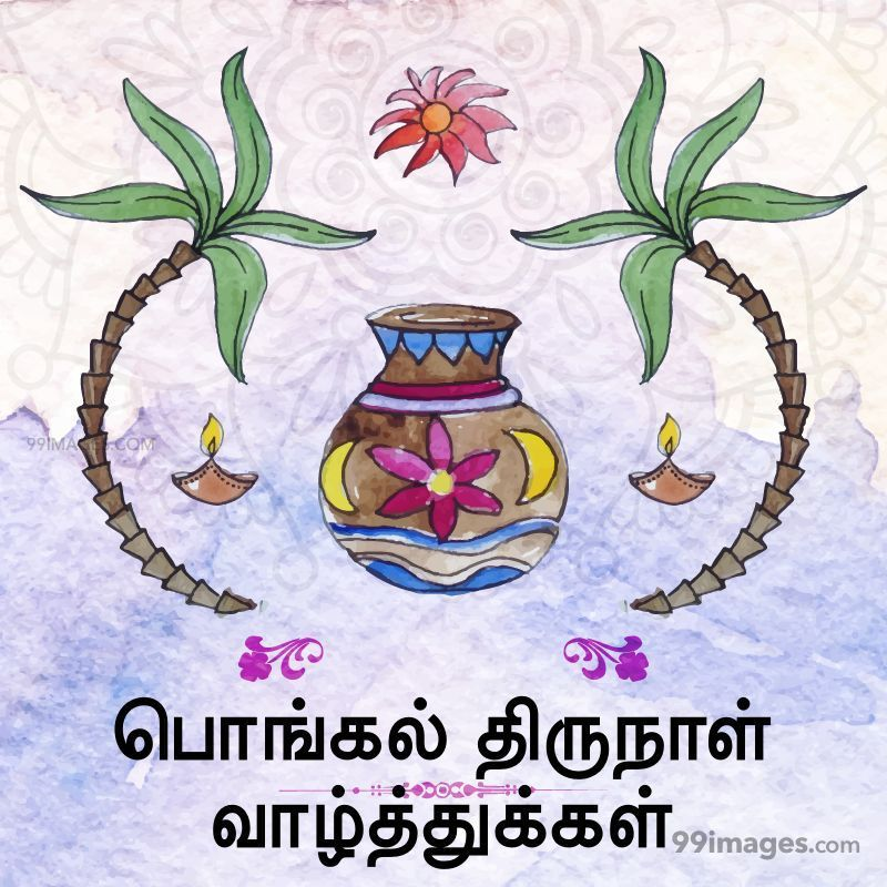 [14th January 2021] Happy Pongal (Pongal Vazhthukkal) in Tamil, WhatsApp DP Images, Wishes, Quotes, Messages HD (282235) - Pongal