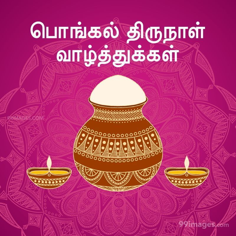 [14th January 2021] Happy Pongal (Pongal Vazhthukkal) in Tamil, WhatsApp DP Images, Wishes, Quotes, Messages HD (282266) - Pongal