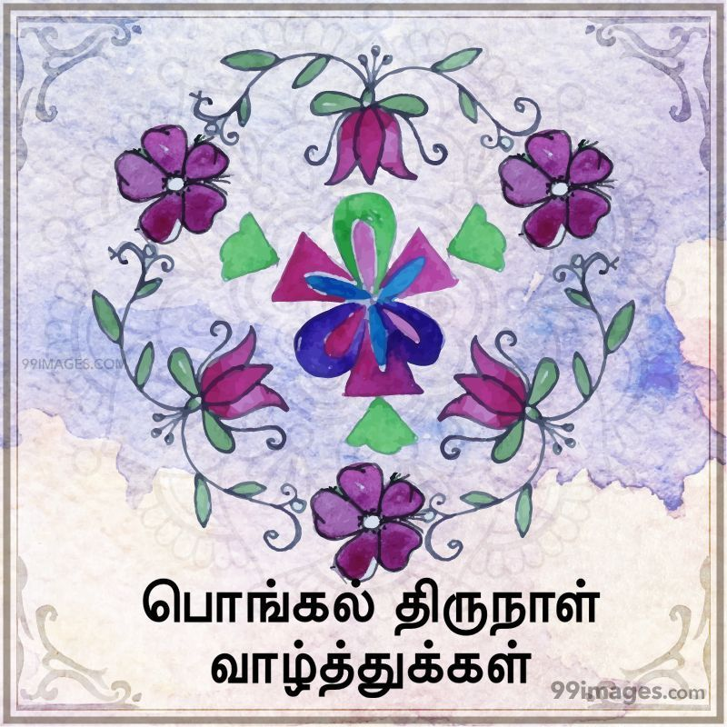 [15th January 2020] Happy Pongal (Pongal Vazhthukkal) in Tamil, WhatsApp DP Images, Wishes, Quotes, Messages HD (282255) - Pongal