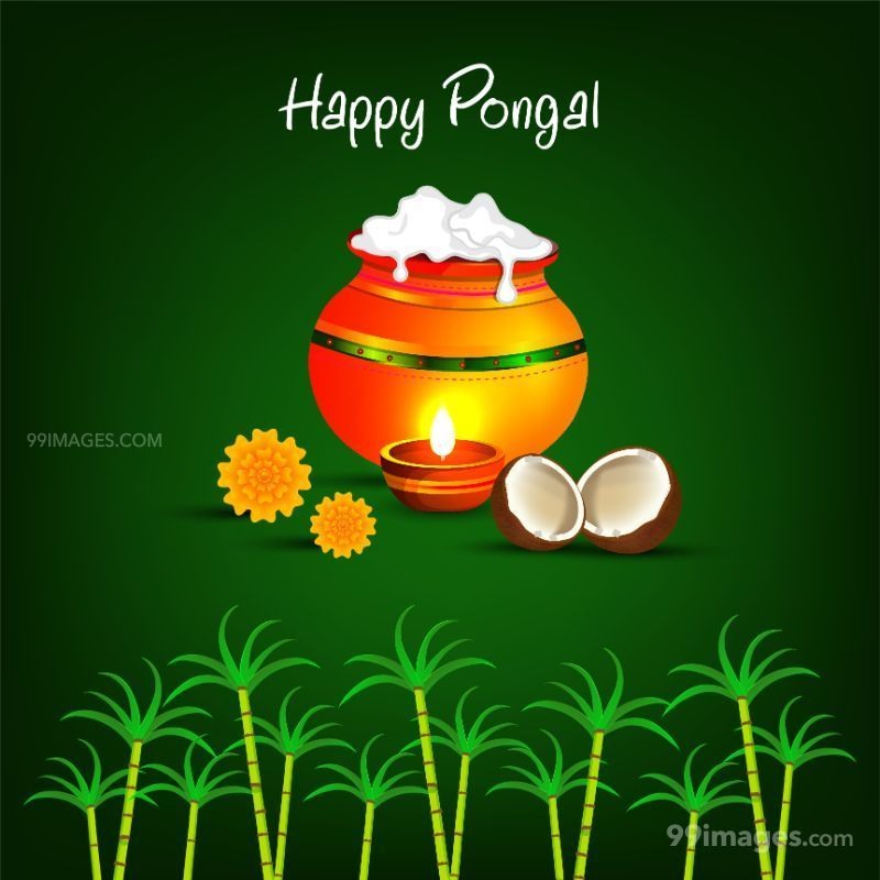 [15th January 2020] Happy Pongal (Pongal Vazhthukkal) WhatsApp DP Images, Wishes, Quotes, Messages HD (283431) - Pongal