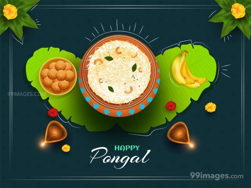 [15th January 2020] Happy Pongal (Pongal Vazhthukkal) WhatsApp DP Images, Wishes, Quotes, Messages HD (283476) - Pongal