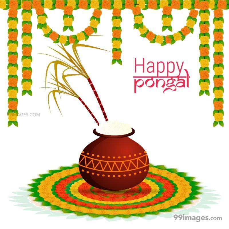 [15th January 2020] Happy Pongal (Pongal Vazhthukkal) WhatsApp DP Images, Wishes, Quotes, Messages HD (283447) - Pongal
