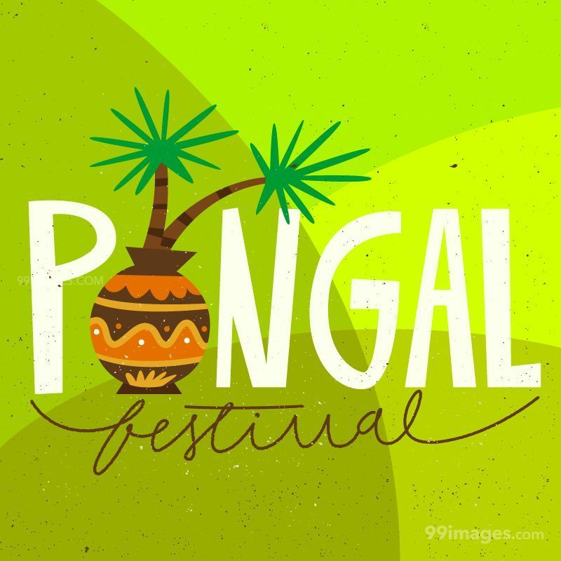 [15th January 2020] Happy Pongal (Pongal Vazhthukkal) WhatsApp DP Images, Wishes, Quotes, Messages HD (283459) - Pongal