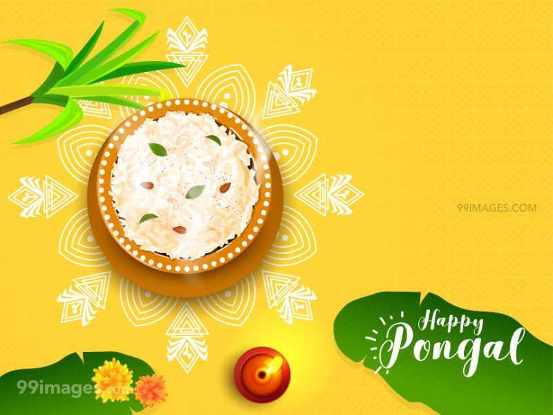 [15th January 2020] Happy Pongal (Pongal Vazhthukkal) WhatsApp DP Images, Wishes, Quotes, Messages HD (283469) - Pongal
