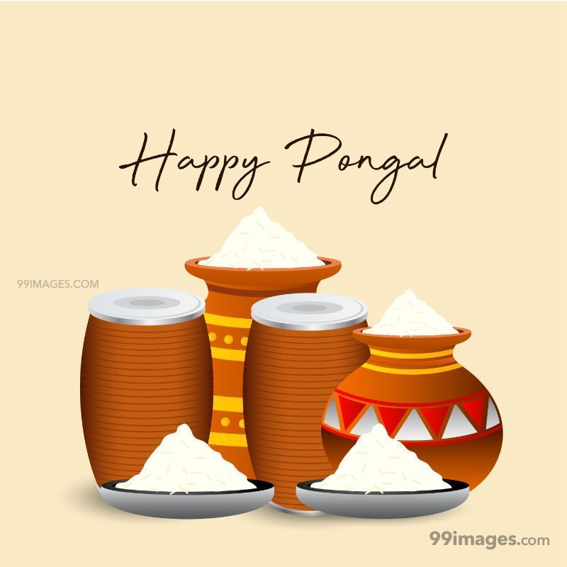 [15th January 2020] Happy Pongal (Pongal Vazhthukkal) WhatsApp DP Images, Wishes, Quotes, Messages HD (283438) - Pongal