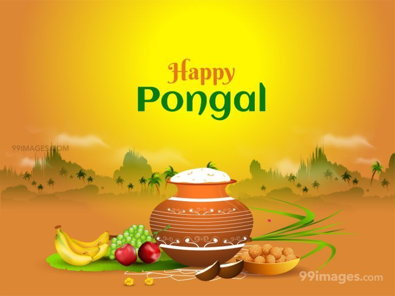 [15th January 2020] Happy Pongal (Pongal Vazhthukkal) WhatsApp DP Images, Wishes, Quotes, Messages HD (283474) - Pongal
