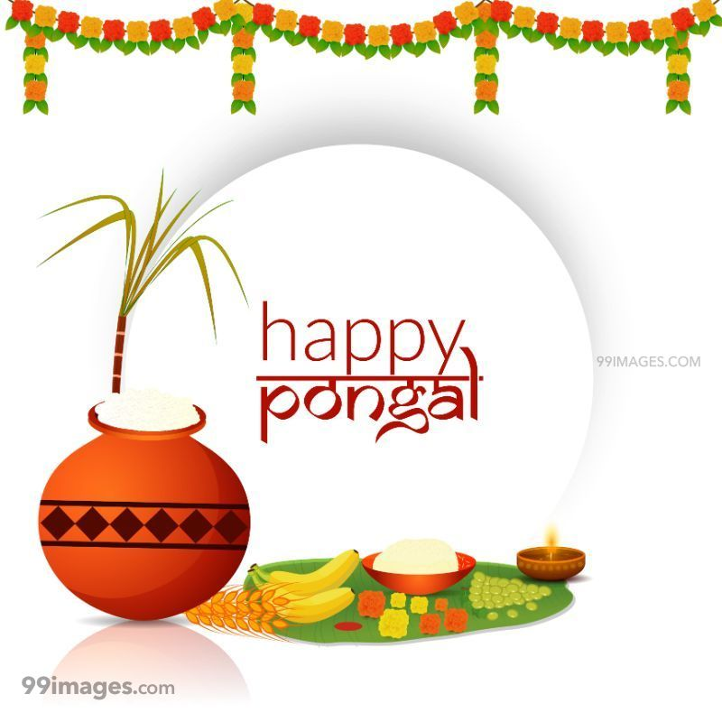 [15th January 2020] Happy Pongal (Pongal Vazhthukkal) WhatsApp DP Images, Wishes, Quotes, Messages HD (283445) - Pongal