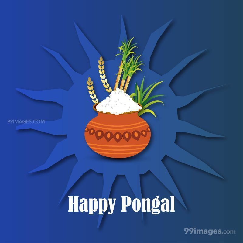 [15th January 2020] Happy Pongal (Pongal Vazhthukkal) WhatsApp DP Images, Wishes, Quotes, Messages HD (283452) - Pongal