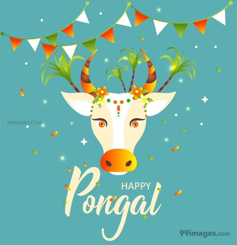 [15th January 2020] Happy Pongal (Pongal Vazhthukkal) WhatsApp DP Images, Wishes, Quotes, Messages HD (283437) - Pongal