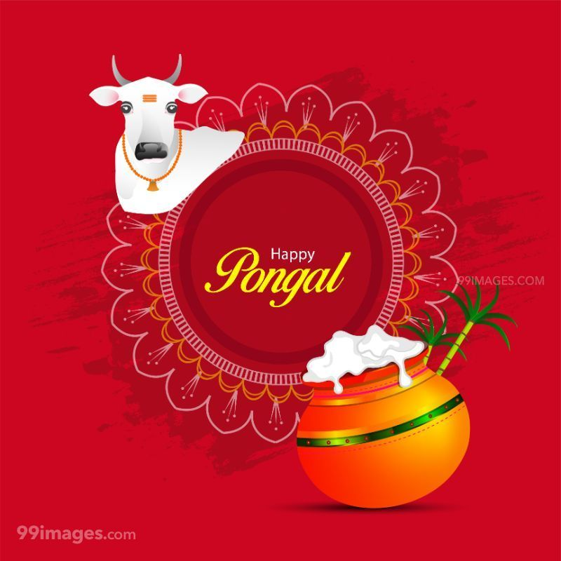 [15th January 2020] Happy Pongal (Pongal Vazhthukkal) WhatsApp DP Images, Wishes, Quotes, Messages HD (283430) - Pongal