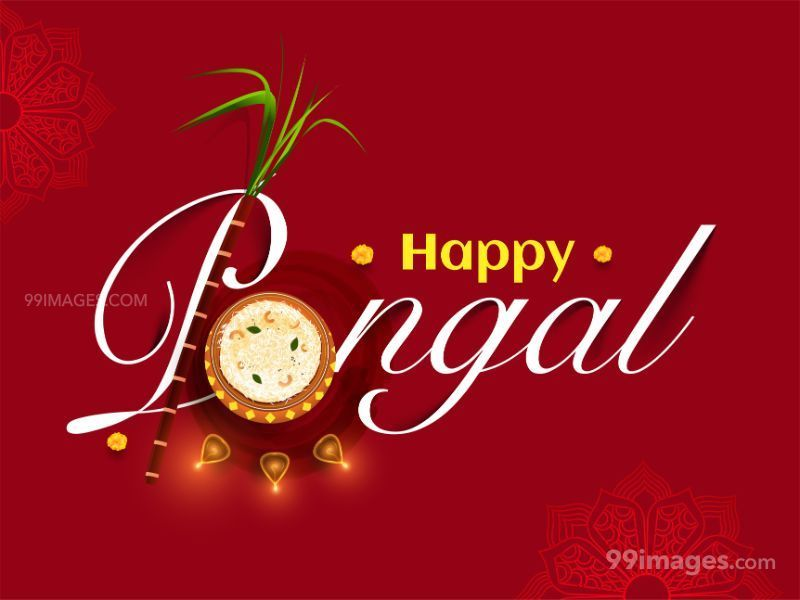 [15th January 2020] Happy Pongal (Pongal Vazhthukkal) WhatsApp DP Images, Wishes, Quotes, Messages HD (283477) - Pongal