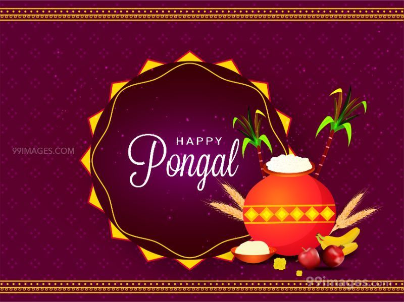 [15th January 2020] Happy Pongal (Pongal Vazhthukkal) WhatsApp DP Images, Wishes, Quotes, Messages HD (283460) - Pongal