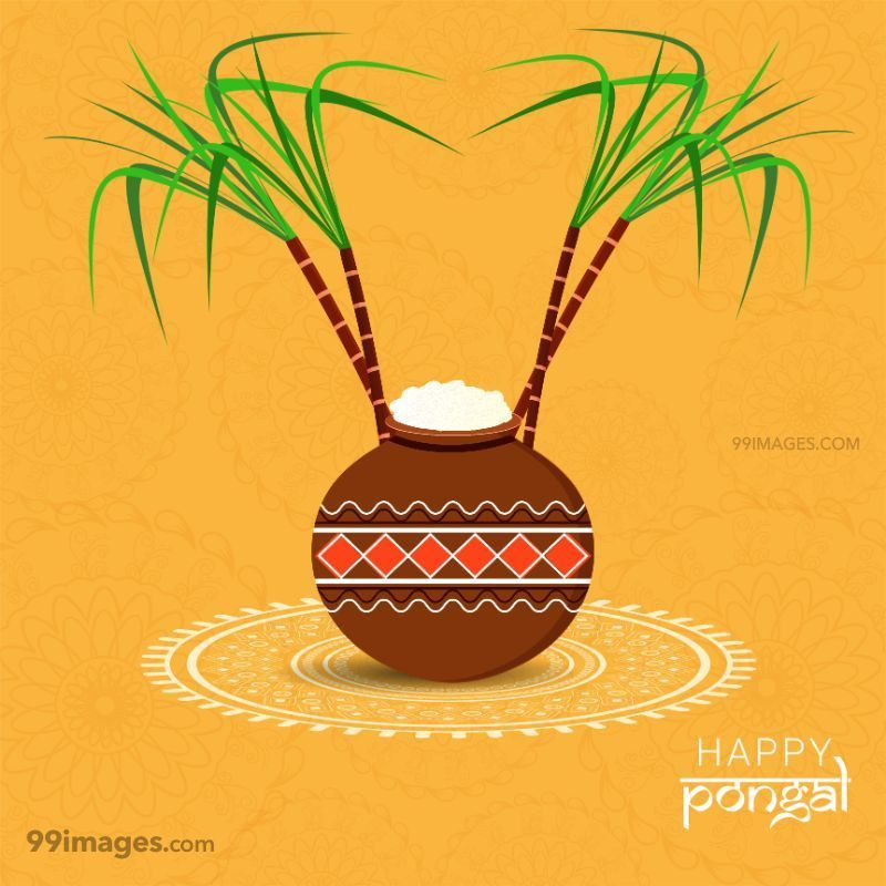 [15th January 2020] Happy Pongal (Pongal Vazhthukkal) WhatsApp DP Images, Wishes, Quotes, Messages HD (283449) - Pongal