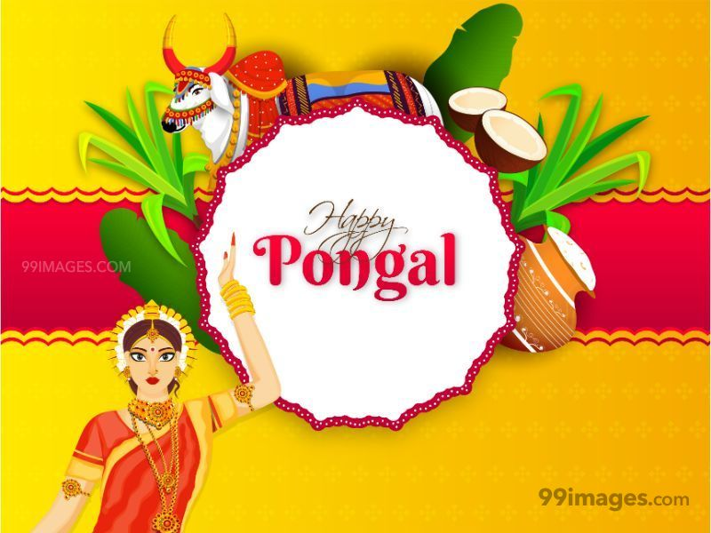 [15th January 2020] Happy Pongal (Pongal Vazhthukkal) WhatsApp DP Images, Wishes, Quotes, Messages HD (283475) - Pongal