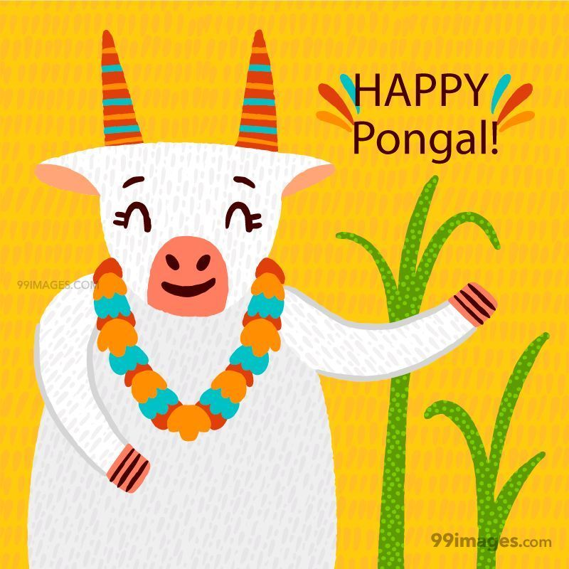 [15th January 2020] Happy Pongal (Pongal Vazhthukkal) WhatsApp DP Images, Wishes, Quotes, Messages HD (283424) - Pongal