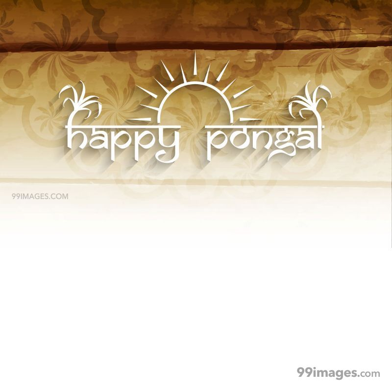 [15th January 2020] Happy Pongal (Pongal Vazhthukkal) WhatsApp DP Images, Wishes, Quotes, Messages HD (283436) - Pongal