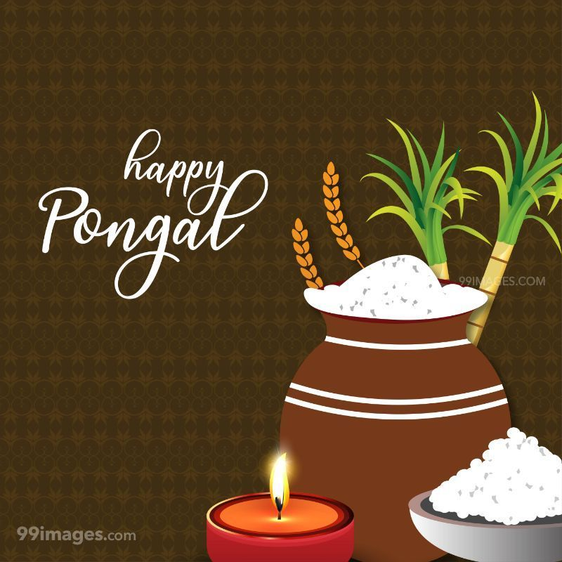 [15th January 2020] Happy Pongal (Pongal Vazhthukkal) WhatsApp DP Images, Wishes, Quotes, Messages HD (283453) - Pongal