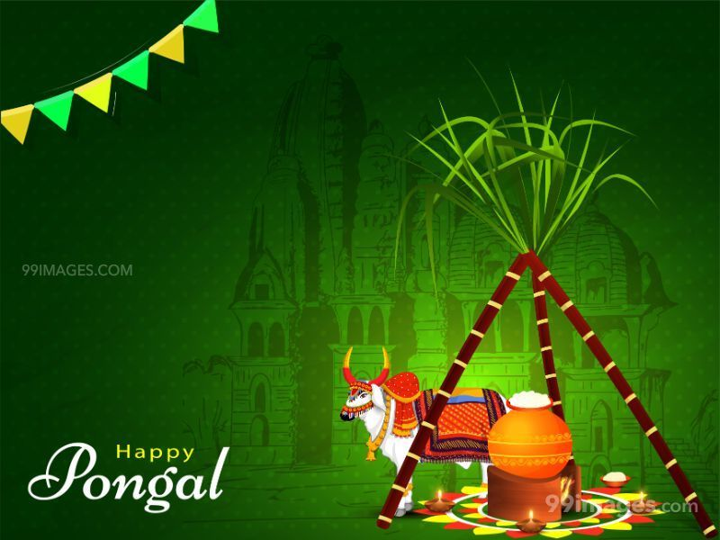 [15th January 2020] Happy Pongal (Pongal Vazhthukkal) WhatsApp DP Images, Wishes, Quotes, Messages HD (283462) - Pongal
