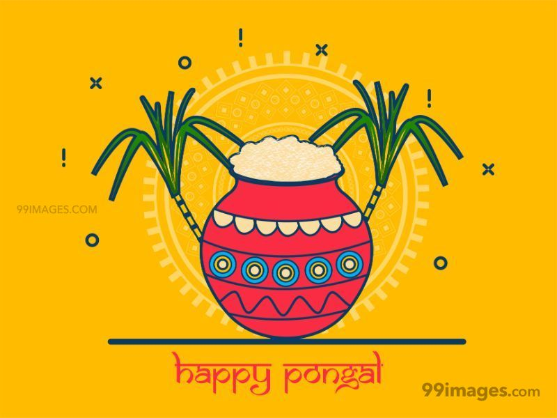 [15th January 2020] Happy Pongal (Pongal Vazhthukkal) WhatsApp DP Images, Wishes, Quotes, Messages HD (283439) - Pongal