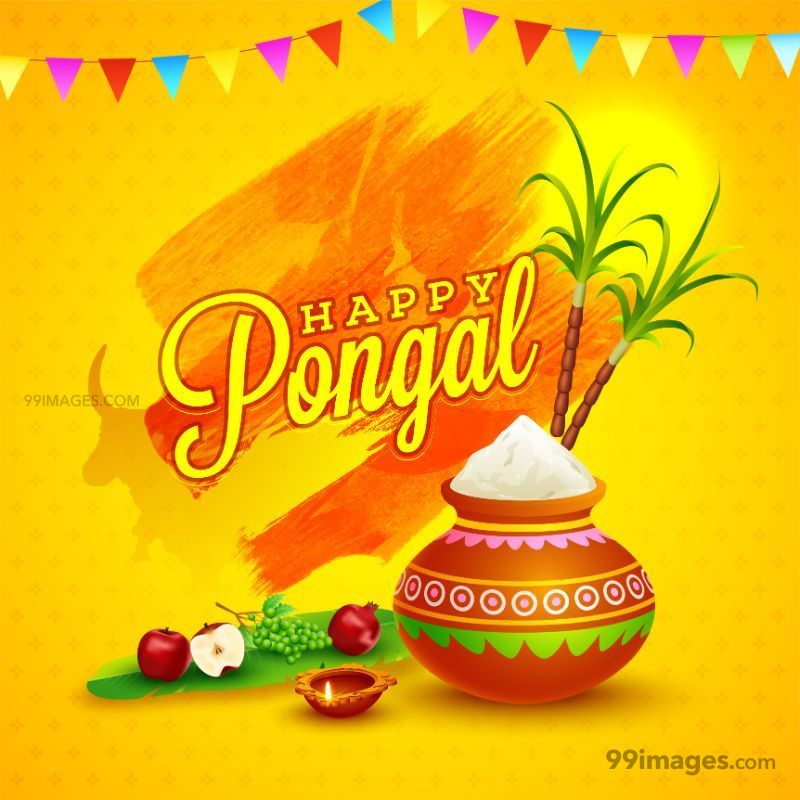 [15th January 2020] Happy Pongal (Pongal Vazhthukkal) WhatsApp DP Images, Wishes, Quotes, Messages HD (283467) - Pongal
