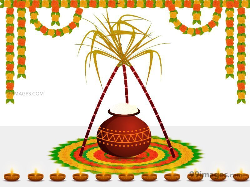 [15th January 2020] Happy Pongal (Pongal Vazhthukkal) WhatsApp DP Images, Wishes, Quotes, Messages HD (283446) - Pongal