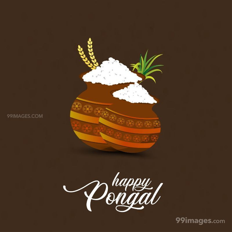 [15th January 2020] Happy Pongal (Pongal Vazhthukkal) WhatsApp DP Images, Wishes, Quotes, Messages HD (283450) - Pongal