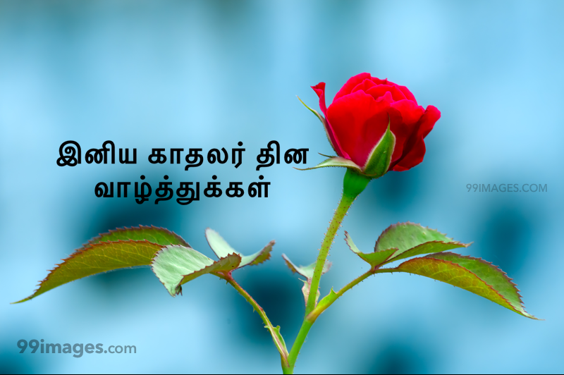 [14 February 2021] Happy Valentines Day in Tamil (kadhalar dhinam vazhthukkal) Romantic Heart Images, Wishes, Love Quotes, Messages (302535) - Valentine's Day