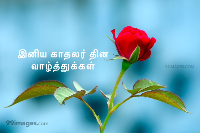 [14 February 2021] Happy Valentines Day in Tamil (kadhalar dhinam vazhthukkal) Romantic Heart Images, Wishes, Love Quotes, Messages (302538) - Valentine's Day