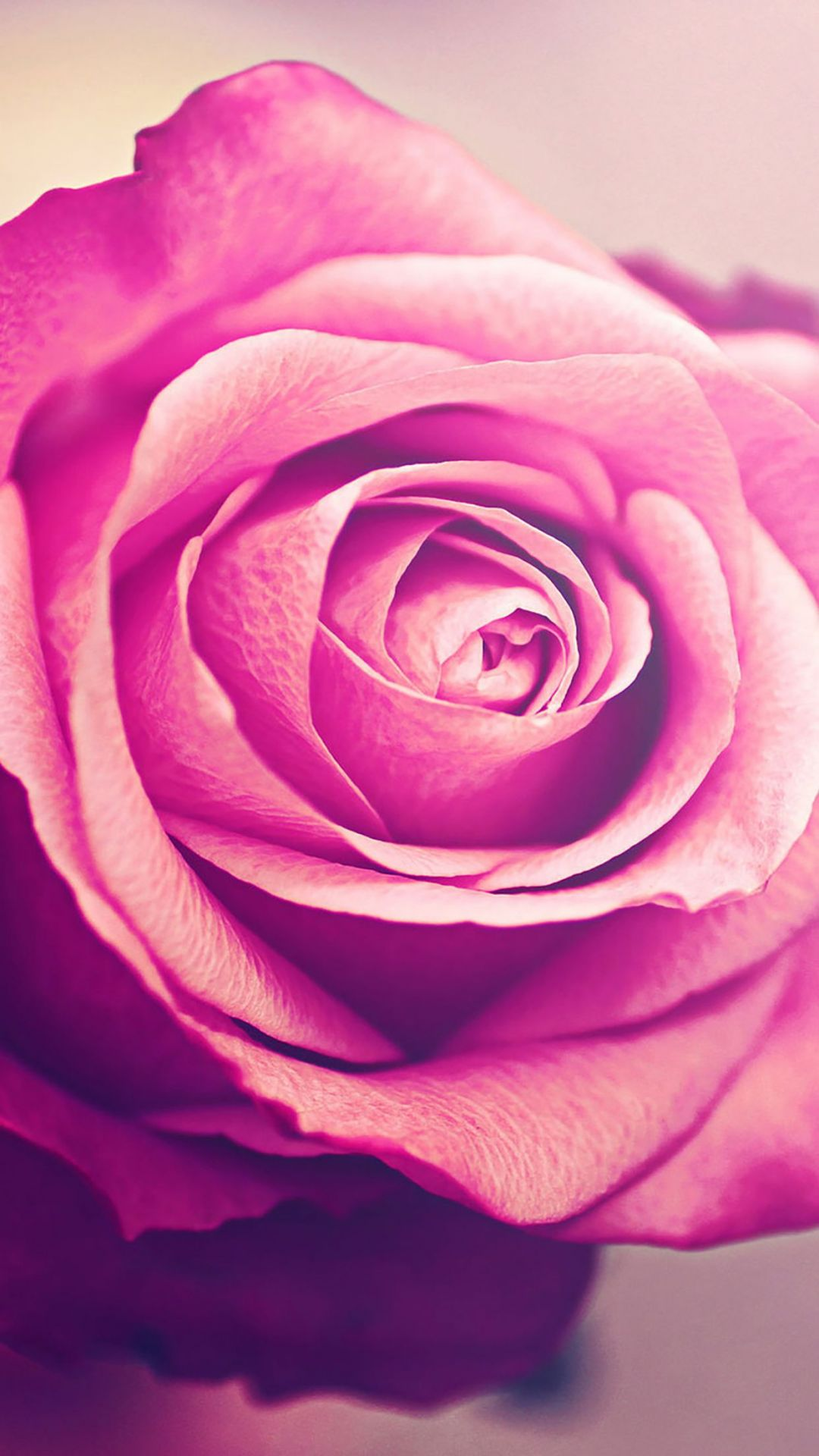 Pink rose love iphone 4s 640 x 960 ...