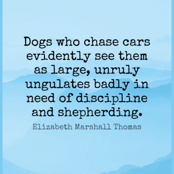 Short Funny Quote by Elizabeth Marshall Thomas about Dog,Discipline,Car for WhatsApp DP / Status, Instagram Story, Facebook Post.