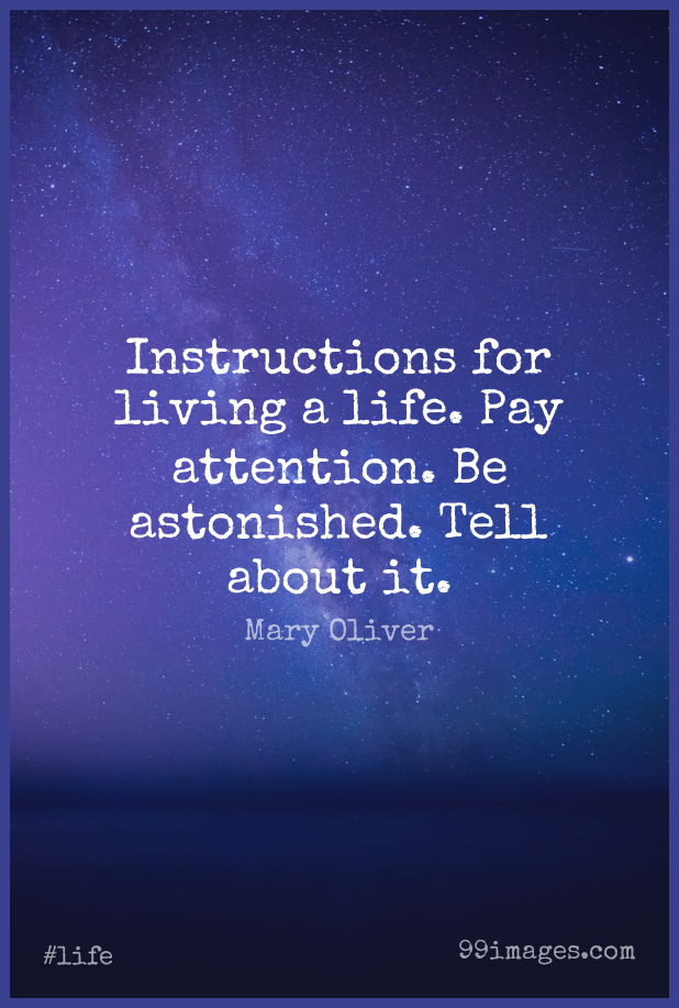 Short Life Quote by Mary Oliver about Pay,Attention,Instruction for WhatsApp DP / Status, Instagram Story, Facebook Post.