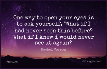 Short Nature Quote by Rachel Carson about Motivational,Change,Gratitude for WhatsApp DP / Status, Instagram Story, Facebook Post.