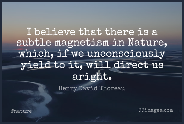 Short Nature Quote by Henry David Thoreau about Believe,Yield,Wilderness for WhatsApp DP / Status, Instagram Story, Facebook Post. (503554) - Nature Quotes