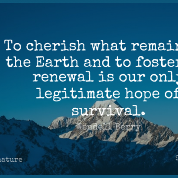 Short Nature Quote by Wendell Berry about Garden,Earth Day,Survival for WhatsApp DP / Status, Instagram Story, Facebook Post.