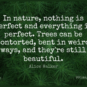 Short Nature Quote by Alice Walker about Beauty,Beautiful,Travel for WhatsApp DP / Status, Instagram Story, Facebook Post.