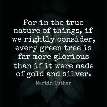 Short Nature Quote by Martin Luther about Tree,Earth Day,Gold for WhatsApp DP / Status, Instagram Story, Facebook Post.