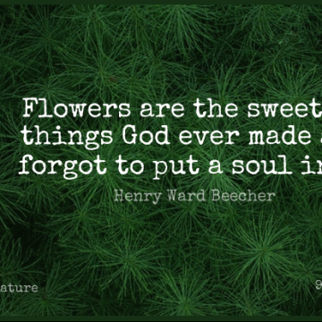 Short Nature Quote by Henry Ward Beecher about Flower,Garden,Perfection for WhatsApp DP / Status, Instagram Story, Facebook Post.
