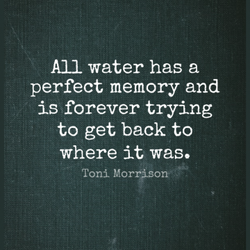 Short Nature Quote by Toni Morrison about Memories,Reality,Water Of Life for WhatsApp DP / Status, Instagram Story, Facebook Post.