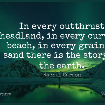 Short Nature Quote by Rachel Carson about Beach,Ocean,Memorable for WhatsApp DP / Status, Instagram Story, Facebook Post.